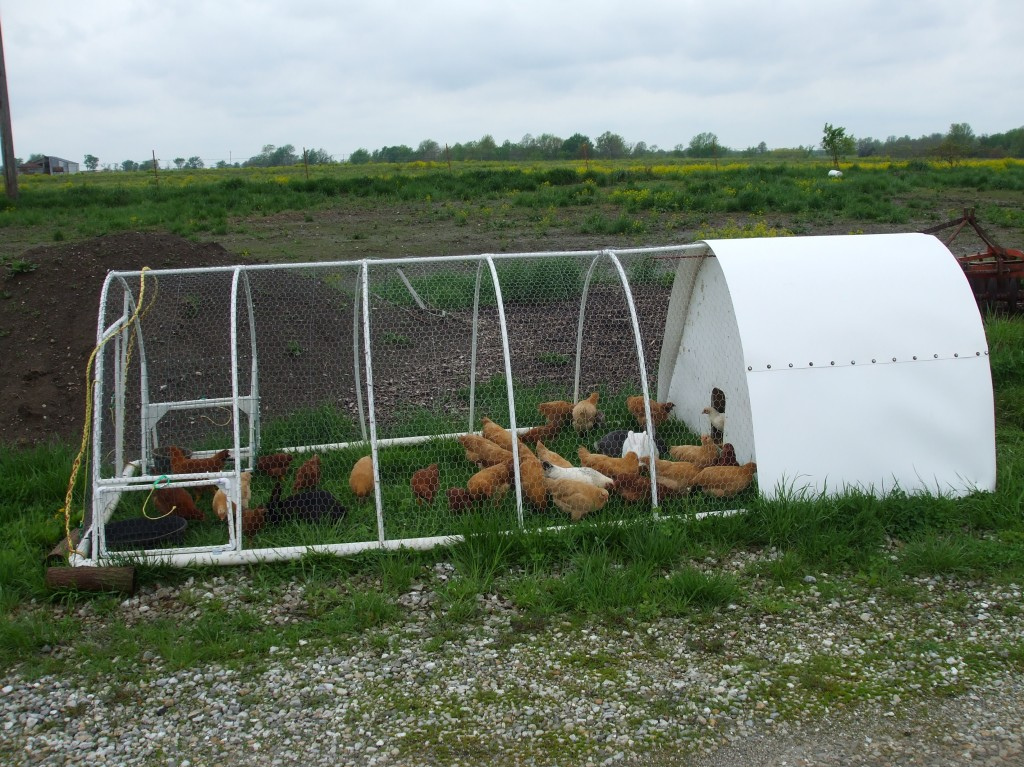 Pin pvc chicken coop plans photos on pinterest for Pvc chicken house