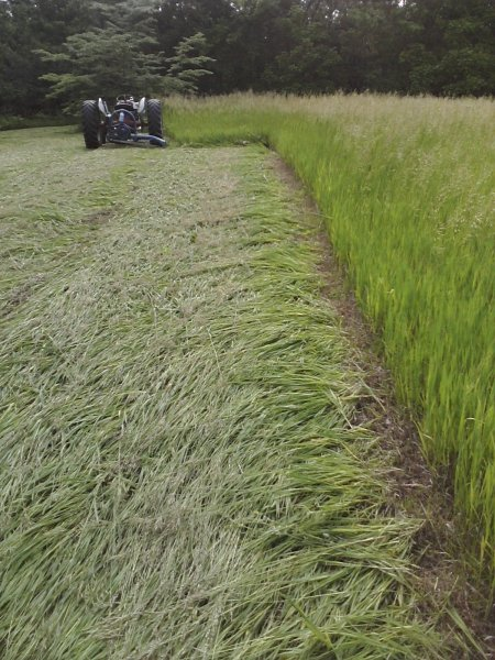 Cutting Brome Grass for Hay