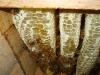 Inside Top Bar Hive
