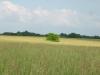 grandpas-farm-206_0