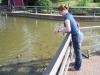 Hannibal Missouri Carp Pond