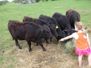 Jade Feeding the Dexters