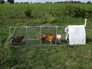 Chicken Tractor Row Cultivator