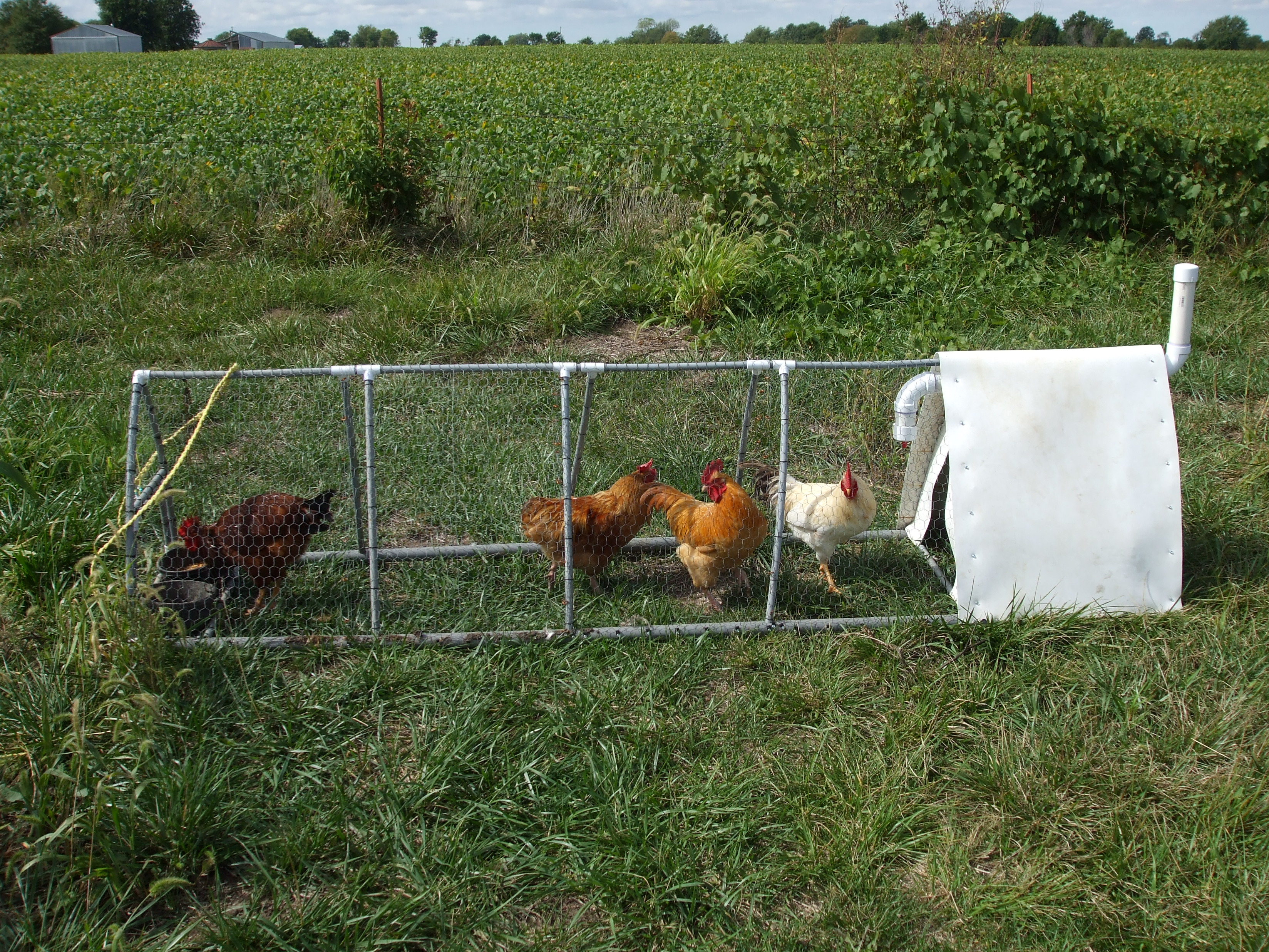 chickens u0026 poultry lewis family farm