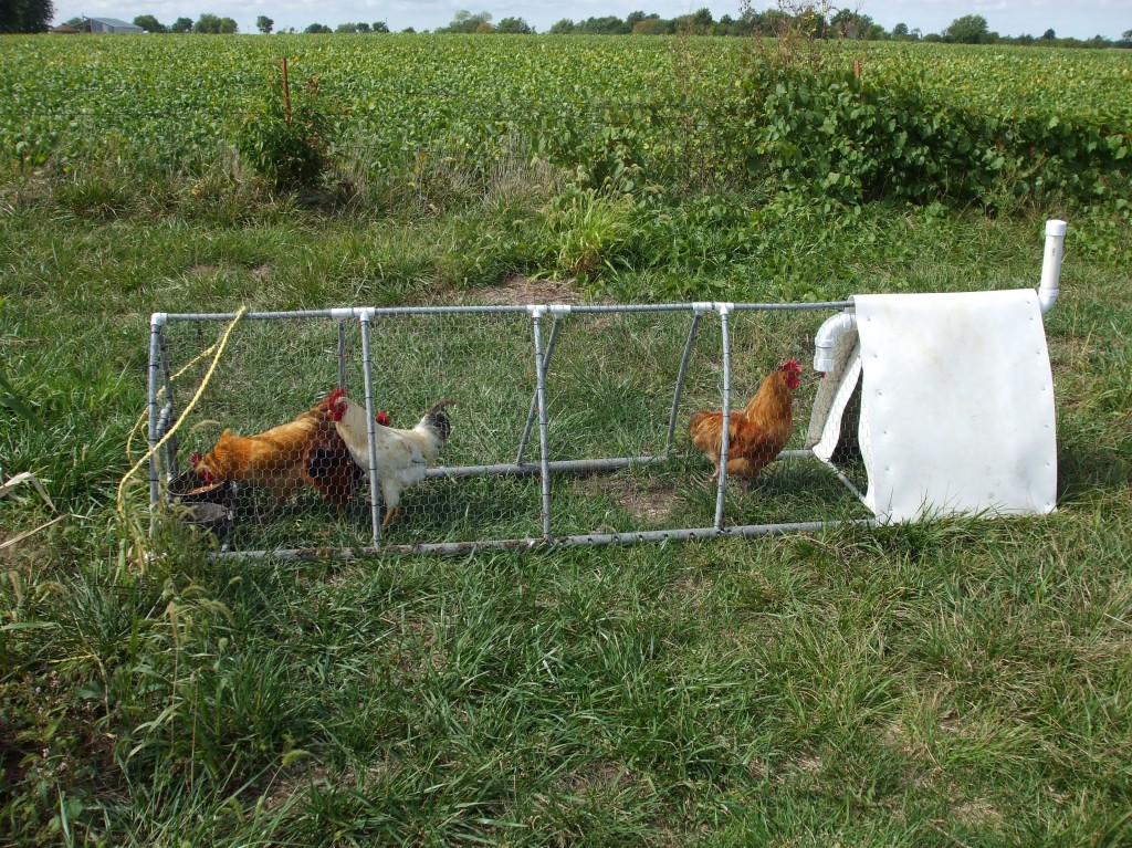 Building The Pvc Chicken Tractor Cultivator Lewis Family