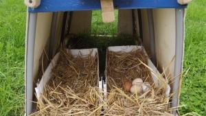 LFF Half Bucket Chicken Nest Boxes